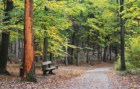 Nejkrásnější podzimní závod v Praze. Klánovice vyhlíží 5. ročník říjnového půlmaratonu