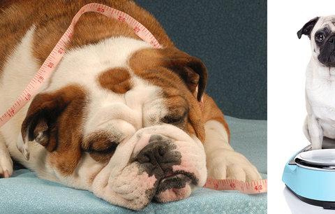 Veterinářka varuje: Nadváhu má až 40 % psů a koček! Jak tloušťku bezpečně poznat?