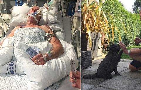 Teddy probral páníčka z umělého spánku: Teď obchází nemocnice jako terapeutický pes