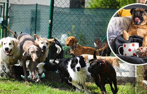Místo dětí posílají Češi do školek psí mazlíčky: Kolik se platí a koho přijmou?