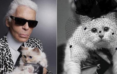 Lagerfeldova (†85) kočičí láska oplakává jeho smrt: Píše vzkazy na instagram