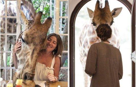 Tady se snídá s žirafami! Unikátní hotel, kde zažijete luxusní safari