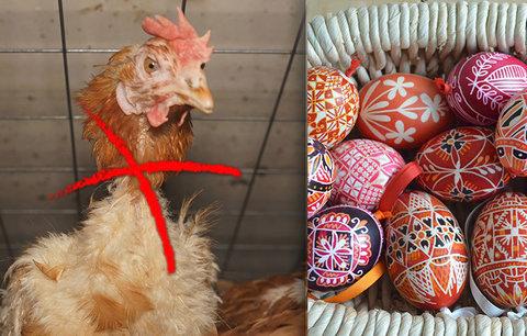 Velikonoční pohroma: Plato vajec zdraží až o 30 korun, slepicím se uleví