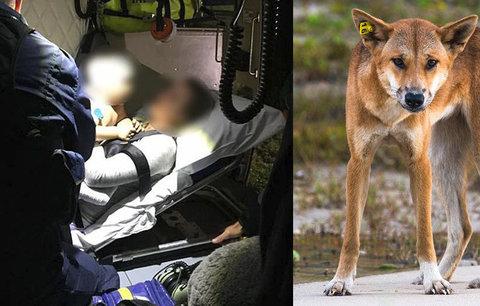 Chlapečka (14 měs.) z domu odvlekli psi dingo: Hrdinný otec jim ho vyrval z tlamy!