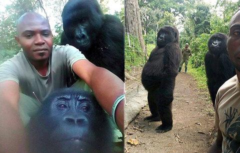 """Pytláci jim zabili mámu, strážci parku je vypiplali od """"miminek"""": Gorily vystřihly selfie jako lidi"""