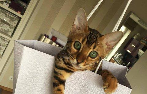 Tahle kočka umí to, co vy! Neuvěříte, o co jde