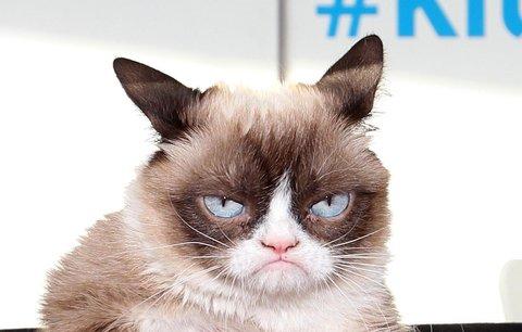 Zahynula nejmrzutější kočička (†7) světa: Grumpy Cat naposledy vydechla paničce v náručí