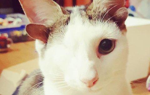Čtyři uši a jedno oko! Tenhle kocour je díky svým vadám celebrita