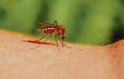 """Koho nejraději """"žerou"""" krvelačné potvory? Komáři jdou po blondýnách, těhotných a svalnatcích!"""