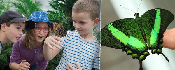 Výletní areál Diana v Karlových Varech: Motýli, kam se podíváš!