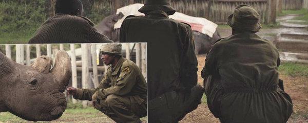 Poslední snímky nosorožce Sudána: Ošetřovatelé ho nechtěli opustit. Truchlí i DiCaprio