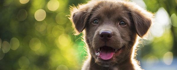 Startuje nejPes 2018! Přihlaste svého psího přítele a hrajte o ceny za 100 tisíc korun!