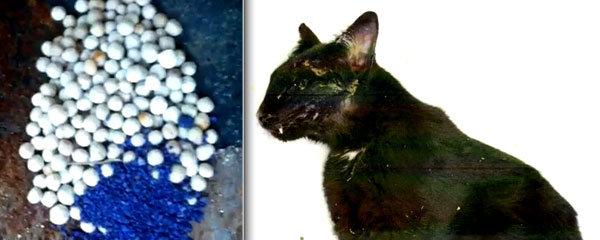 Na Vsetínsku řádí travič koček: Zabil již desítky zvířat