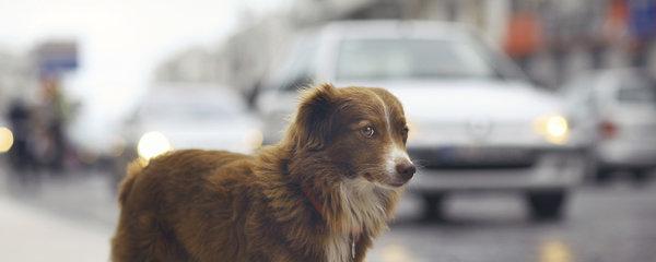 Chcete mít psa pod dohledem? Pořiďte mu GPS lokátor, se kterým už se nezatoulá!