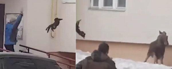 Bizarní situace z Ruska: Chtěli vyhnat losa z města, hodili po něm kočku