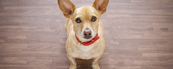 Nejčastější chyby při krmení psa: Co mu rozhodně nesmíte dávat!