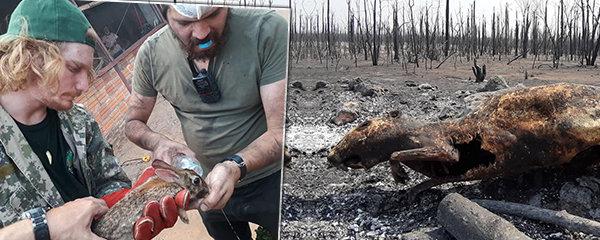 Veterináři z Čech pomáhají v hořící Amazonii: Jen občas najdeme žijící zvířata