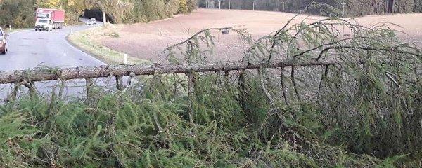 Čechy v neděli zasáhne silný vítr. A konec listopadu přinese až 14 °C