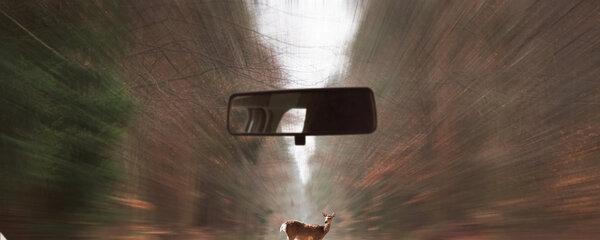 Co to znamená, když vám těchto 10 zvířat vstoupí do cesty? Berte to jako vzkaz!