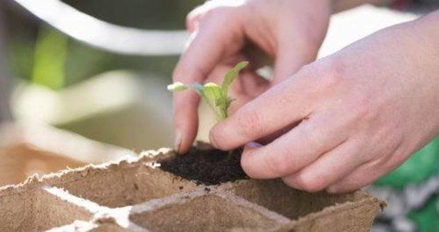 Koncem února  nejvyšší čas předpěstovat si první jarní zeleninu