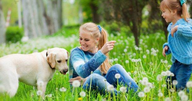 I když o svého mazlíčka pečujete sebelépe, blechy a další parazité se mu do kožíšku dostanou snadno třeba při procházce.