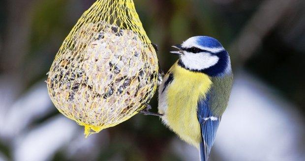 Manželky a velké ptáky