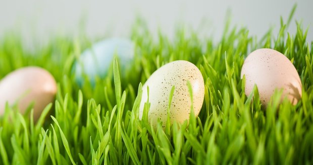 Jarní osení k Velikonocům patří.