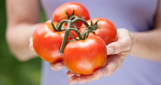Máme pro vás několik jednoduchých tipů na to, jak zeleným rajčatům pomoci, aby vám dozrála doma.