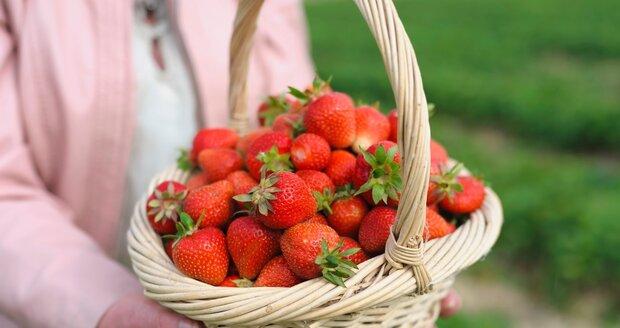 Jahody patří mezi nejoblíbenější ovoce. Někdy se jim vša nedaří a zahrádkáři si nevědí rady.