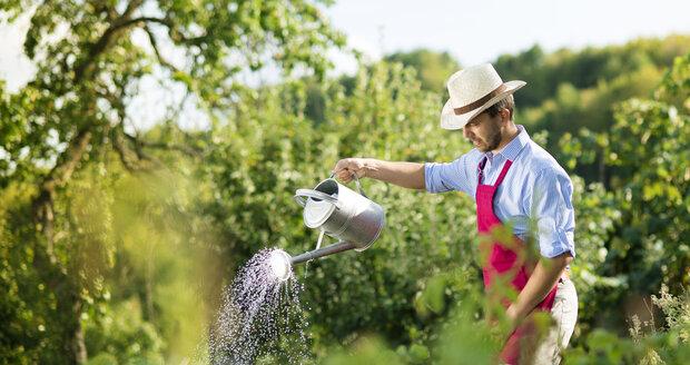 Rajčata zalévejte pravidelně a ke kořenům.