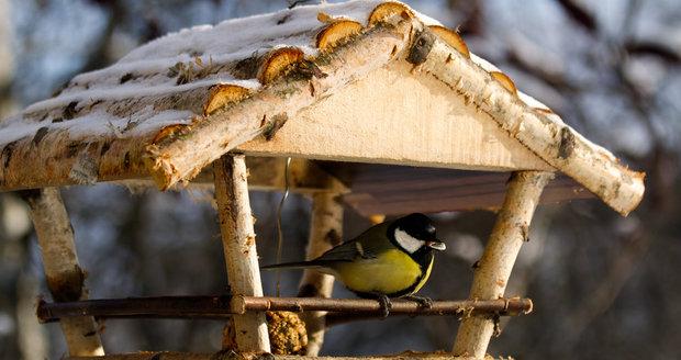 Při plnění ptačích krmítek musíte dávat pozor, abyste neservírovali jedy.