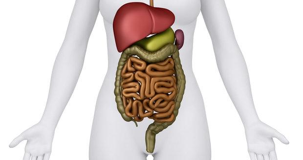 Vědci objevili nový orgán v lidském těle. Skrýval se ve střevech