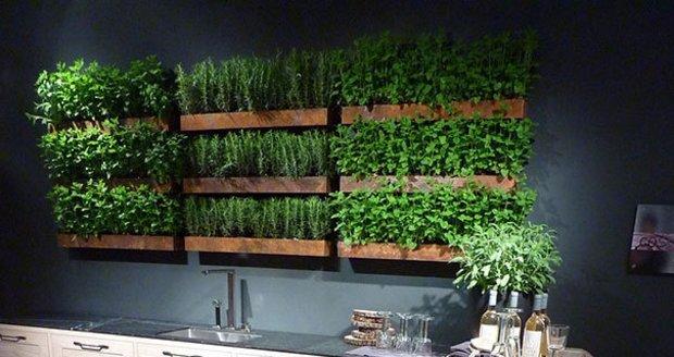 Jak pěstovat bylinky, i když nemáte v kuchyni dostatek světla nebo místa? Víme, jak na to!