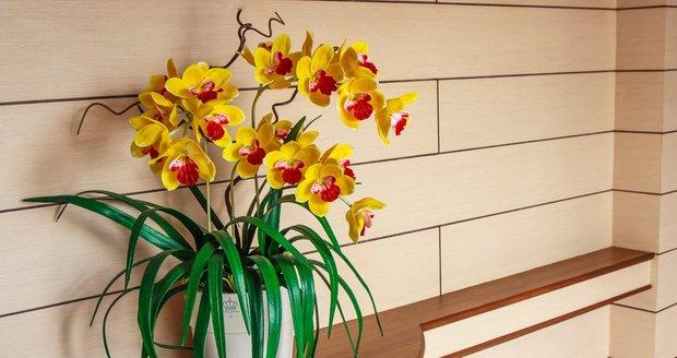 Při správné péči vám orchidej pokvete po celý rok.