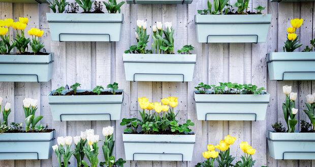 Vertikální zahrady mají tu výhodu, že je můžete založit i na balkonech, na obvodových zdech třeba u vchodu.