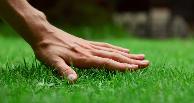 Dokonalý trávník není věda, když se vyhnete nejčastějším chybám.