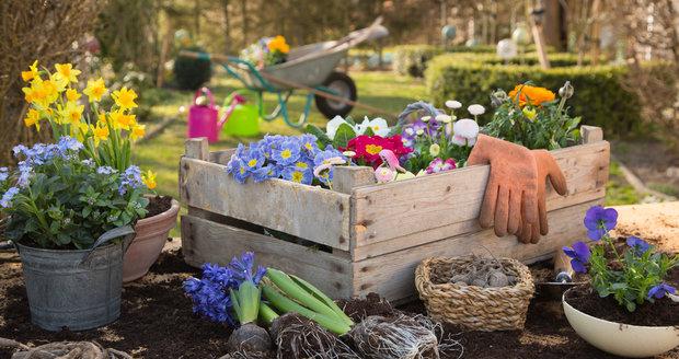 I když venku občas svítí sluníčko, pro většinu květin v květináči je tam ještě zima. Mráz nevadí třeba primulkám nebo jarním cibulovinám.