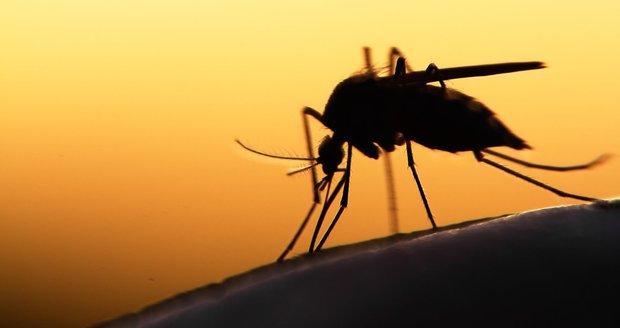Nenechte se překvapit invazí komárů a předem se na ni připravte.
