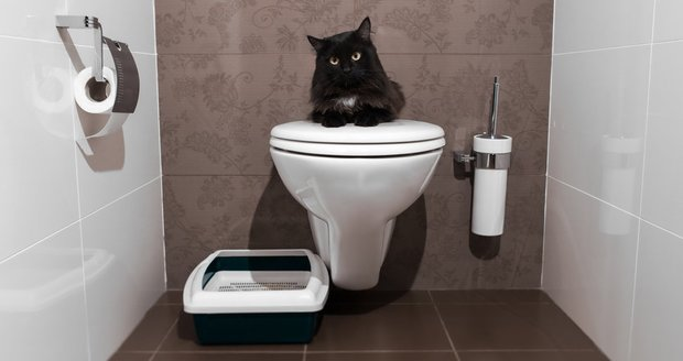 Kočičí toaleta nemusí být všem na očích, v bytě ji můžete šikovně schovat.