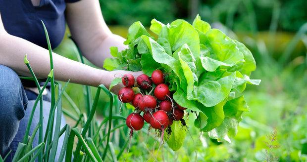 Nenechejte prázdné záhony ležet ladem. Do zimy na nich ještě můžete vypěstovat spoustu chutné zeleniny.