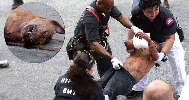 Pitbul málem rozcupoval muže, zachránil ho člen vězeňské ostrahy. Psovi prostřelil hlavu