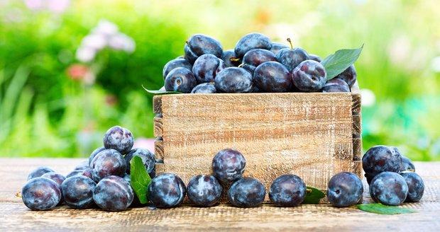 Švestky jsou oblíbeným ovocem Čechů. Málokdo však tuší, že pokud je dobře uskladníte, vydrží vám čerstvé až do ledna.