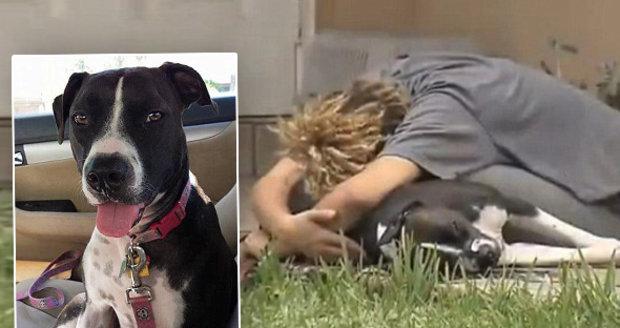 Policista zničehonic zastřelil psa přímo před majitelkou, třikrát ho trefil do hlavy