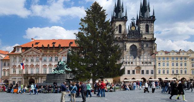 Staroměstské náměstí a strom z České Lípy, který tam letos bude (koláž)