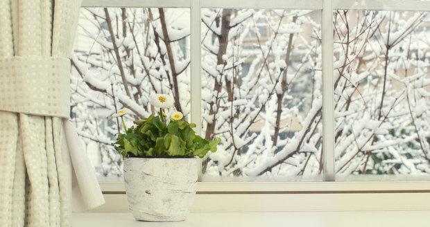 Při větrání dejte pozor na ledový vzduch i průvan, květinám nesvědčí