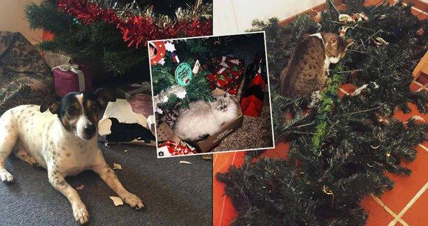 Domácí mazlíčci mají na Vánoce vlastní názor.