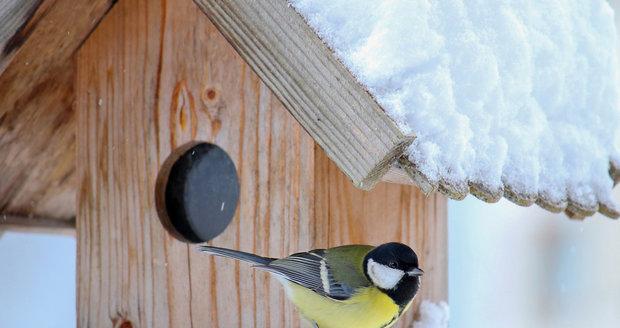 Do krmítka nepatří všechny potraviny, jaká jsou pravidla, abychom ptáčkům neuškodili?
