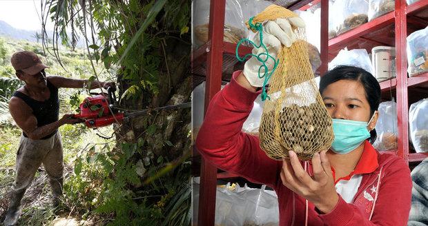 """Palmový olej """"zabiják"""": 100 potravin, které nejíst, když chcete chránit pralesy"""