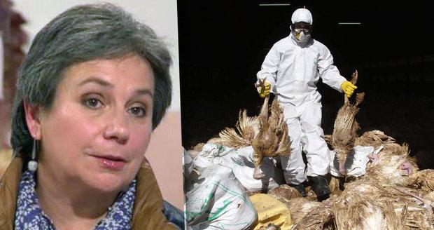 Odbornice: Nikdo neví, kdy udeří pandemie chřipky. Virus stále mutuje
