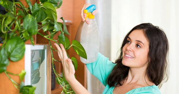 Rostliny okysličují vzduch a čistí ho od jedů